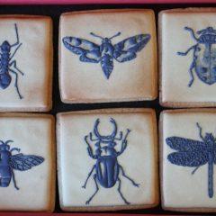 illustrations d'insectes
